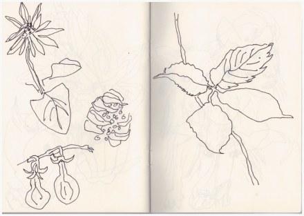 Die Natur und Leopold mit Conny (c) Zeichnung von Susanne Haun